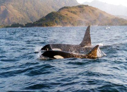 Bareboatzeilen Brazilie Angra dos Reis - orca's