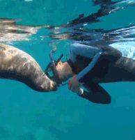 Bareboatzeilen Mexico La Paz - duiken in de Golf van Cortez of Californische Golf